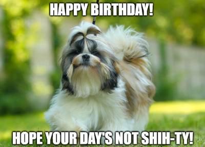 birthday wish for dog image1