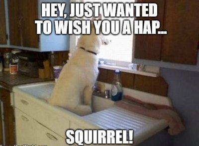 birthday wish for dog image6