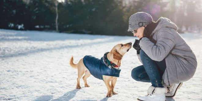 Use Telepathy to Talk to Your Pets