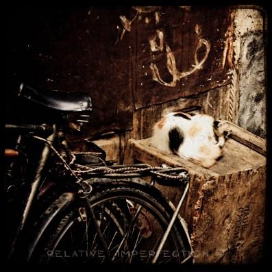 2010 10 rak cat on box ttv wm