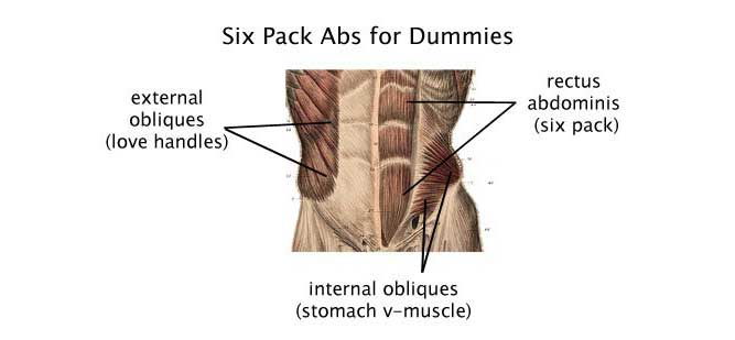 Ab Muscle diagram