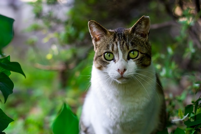 gato photo