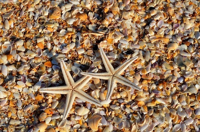 sea star photo