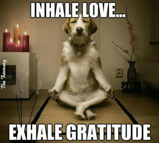 190 Relax and Succeed - Inhale love exhale gratitude