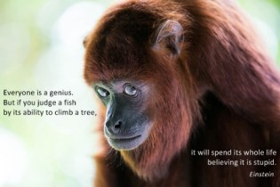 334 Relax and Succeed - Everyone is a genius