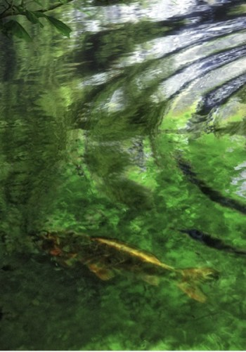 515 Relax and Succeed - Goldfish in Bamboo Stream France by Frank Grisdale