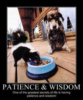 637 Relax and Succeed - Patience and Wisdom