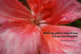 712 Relax and Succeed - When you plant a seed of love