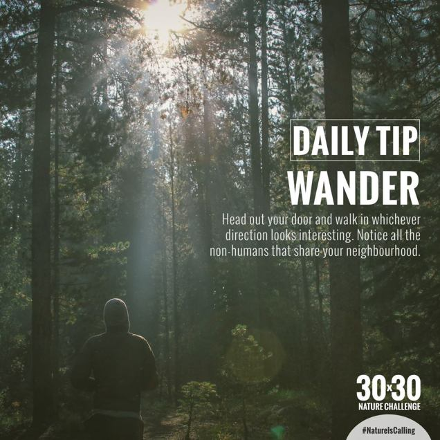 967 Relax and Succeed - Daily tip wander