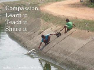 997-relax-and-succeed-compassion-learn-it-teach-it-share-it