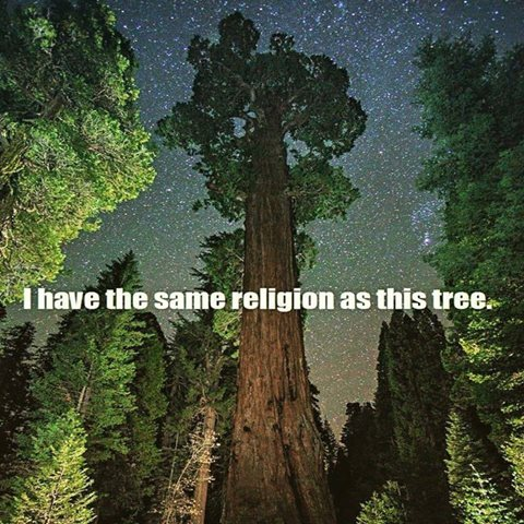 1038-fd-relax-and-succeed-i-have-the-same-religion-as-this-tree