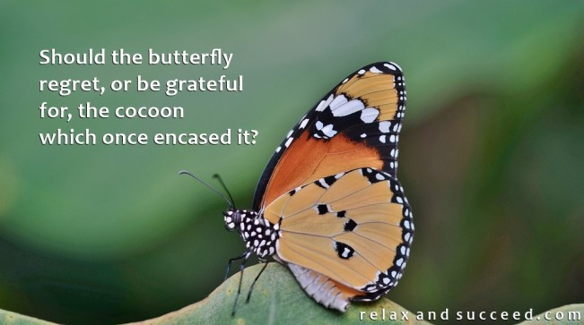 1362 Relax and Succeed - Should the butterfly regret or be grateful for