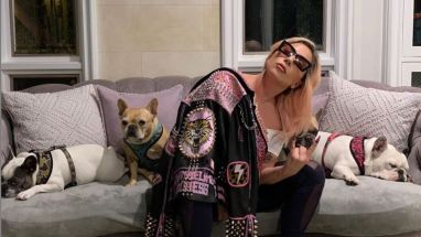 Lady Gaga French Bulldogs Have Been Found, Lady Gaga French Bulldogs Have Been Found- Both Safe and Sound, Relay Vibes