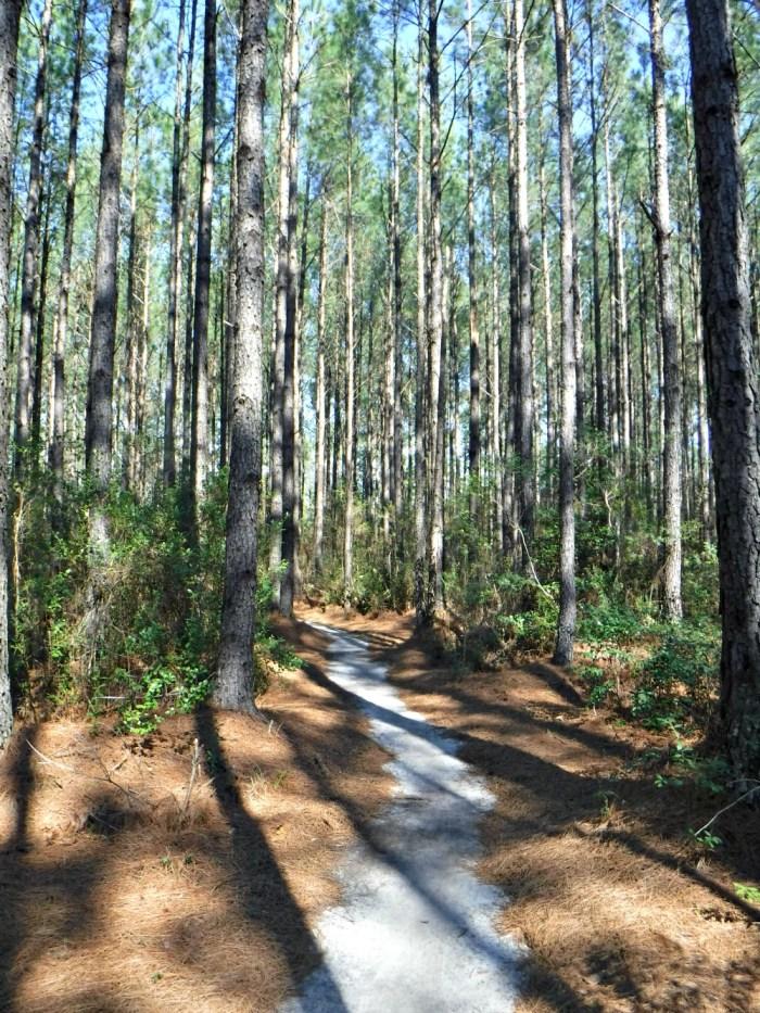 BNP Trail Jam Trail