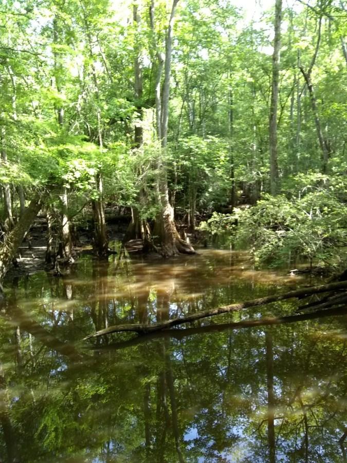Wambaw Swamp Stomp