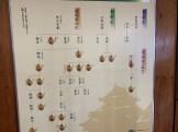 徳川家家系図