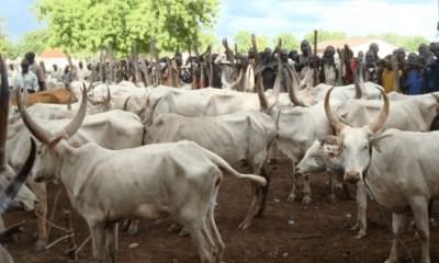 Miyetti Allah demands 30,000Sqm of land for grazing in Delta