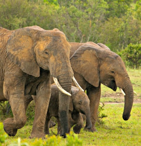 Elephants are social and loving animals. Photo: Siddharth Maheshwari.