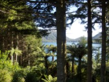 Lake Tikitapu (The blue Lake)