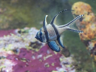National Aquarium - Du Winzling, du