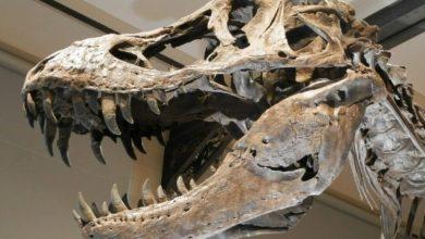 Photo of Mapean en la Antártida los restos del meteorito que acabó con los dinosaurios