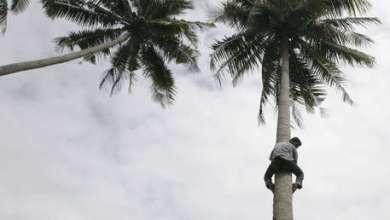 Photo of Video: Un ministro ofrece una rueda de prensa subido a una palmera con un coco en la mano