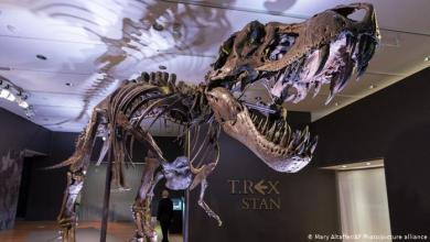Photo of Esqueleto de un T-Rex vendido por US$31 millones