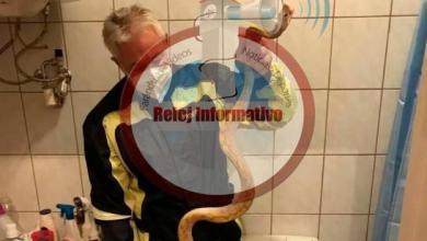 Photo of Estaba sentado en el baño y una pitón le mordió los genitales