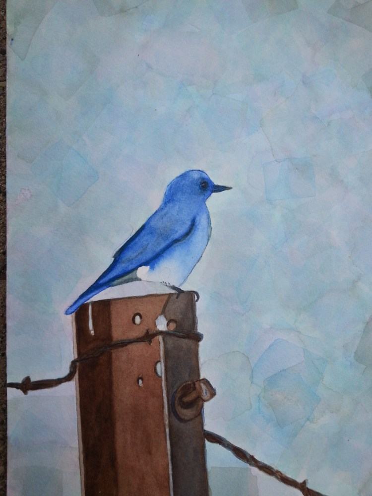 Bluebird (1/2)