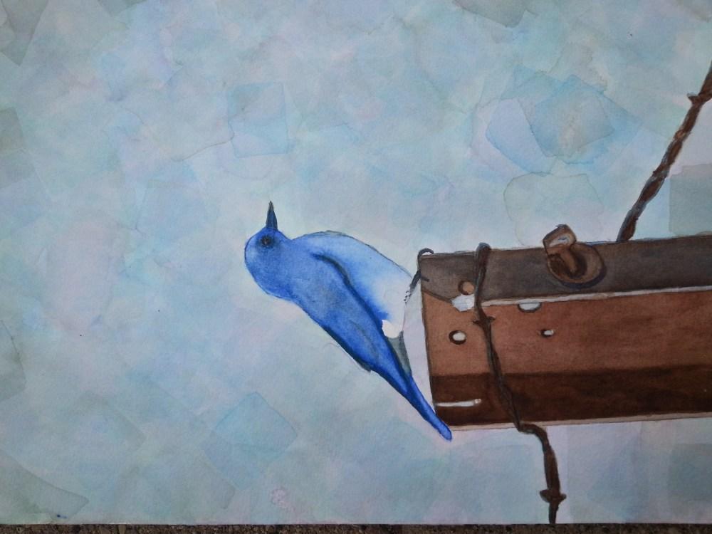 Bluebird (2/2)
