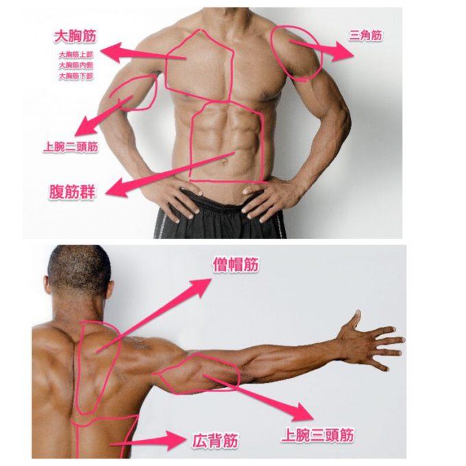 モテる筋肉の部位