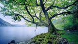 Como árbol junto a las aguas