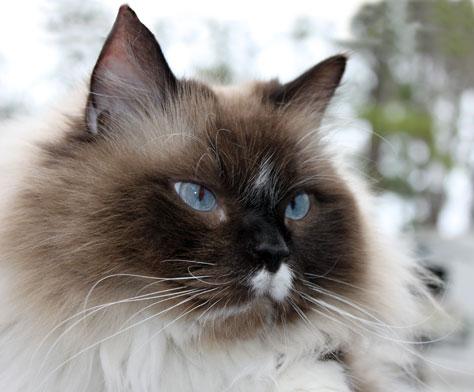 Non Allergic Cats | New Blog 1
