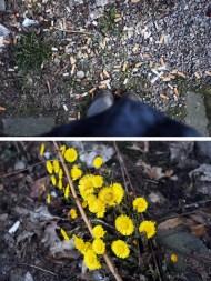 Andere Lebensformen scheinen im Schmutz der Straße eher selten. Zwischen Müll, Dreck und Kippenstummeln haben wir sie trotzdem gefunden.