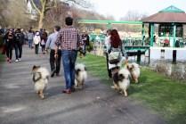 """Gefürchtete Hundegang mit ihren Homosapiens-Homies. Die Selbsthilfegruppe """"Wolfsspitz"""" bei ihrer ersten Schlossteichbegehung."""