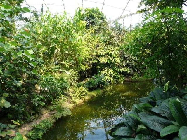 An einigen Stellen sorgt das Gondwanaland durch seine Optik und sein Klima tatsächlich dafür, sich wie in den Tropen zufühlen. Zumindest dafür ist der riesige Tempel gut - wenn sich schon nirgendwo ein Affe blicken lässt.