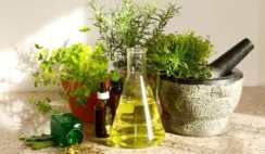 10 Best List of Ayurvedic Medicinal Plants and Their Uses
