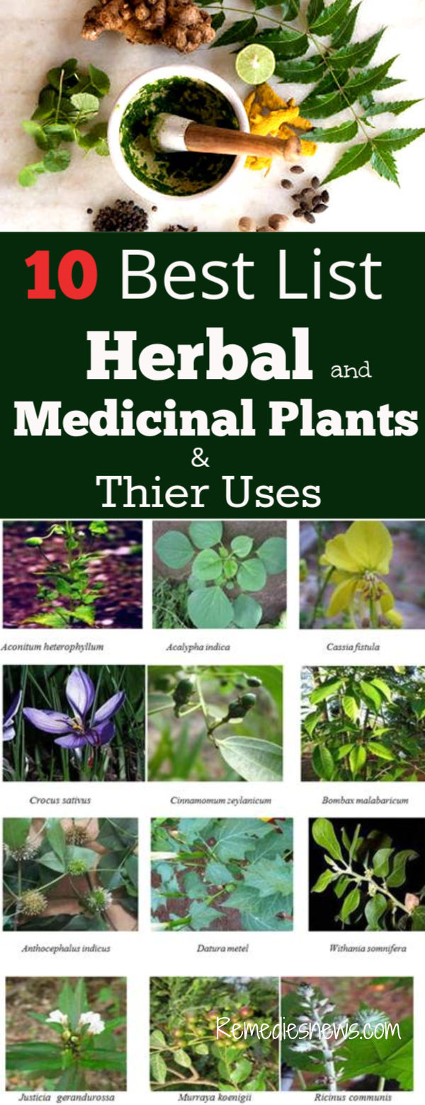 10 Best List of Herbal and Ayurvedic Medicinal Plants and Their Uses