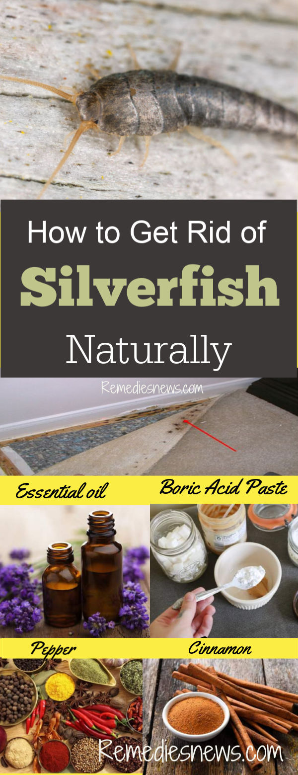 How to Get Rid of Silverfish Naturally.Try these effective best 14 home remedies to make silverfish bugs go away once and for all. Boric acid. Essential oils. Fish. Diatomaceous earth and more