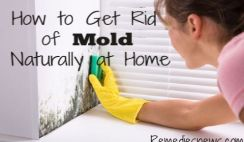 How to Get Rid of Mold Naturally at Home