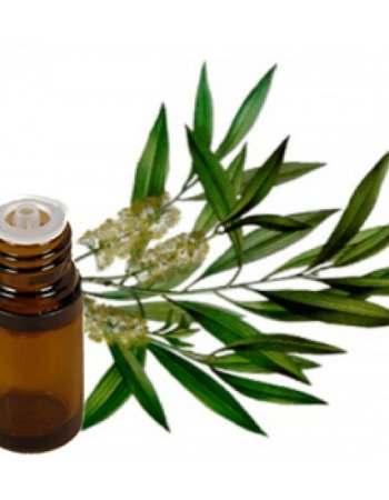 Tea Tree Essential Oil for Pimples