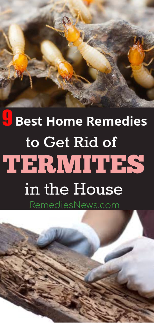 How to Get Rid of Termites Naturally at Home