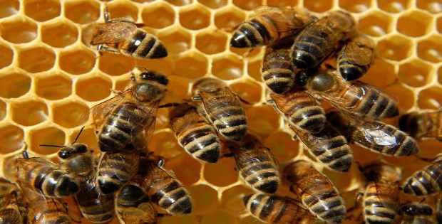 Productoras de miel