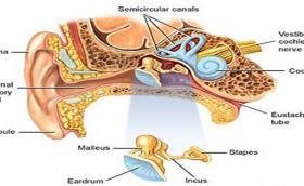 El dolor de oído