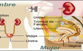 Las infecciones urinarias