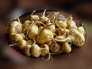 maca-beneficios