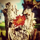 #lonelyflower #outofplace #growingfrommothertree #thoughtofyoutoday