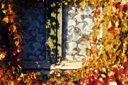 Mimétisme à la fenêtre