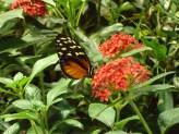 Butterfly farm in Florida