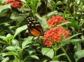 Butterfly farm in Florida